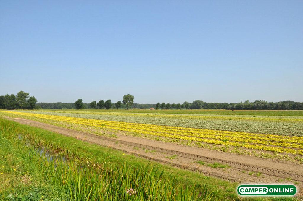 Olanda-Bollenvelden-001