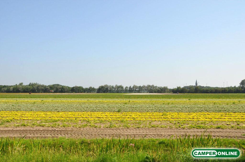 Olanda-Bollenvelden-010