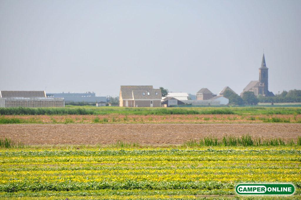Olanda-Bollenvelden-013