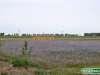 Olanda-Delft-055