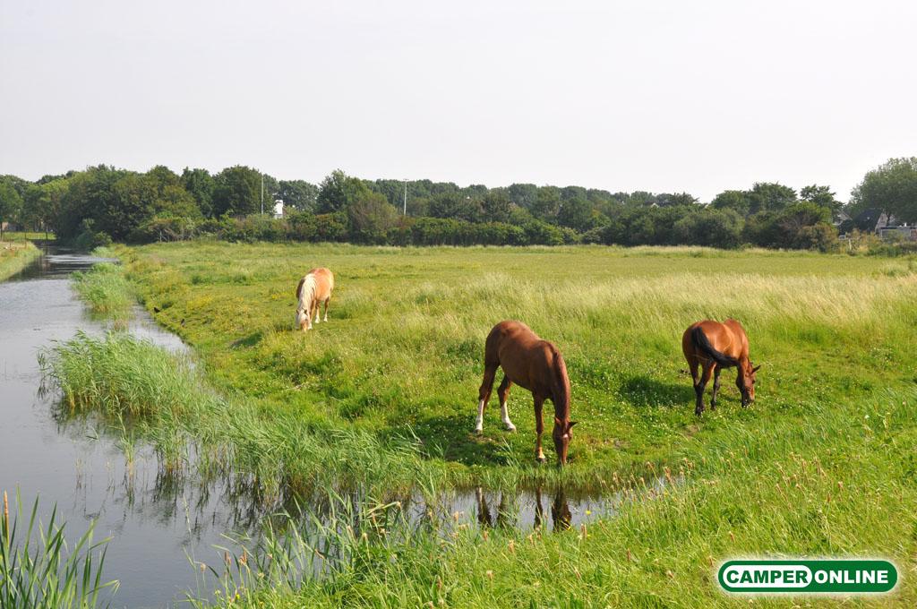 Olanda-Afsluitdijk-001