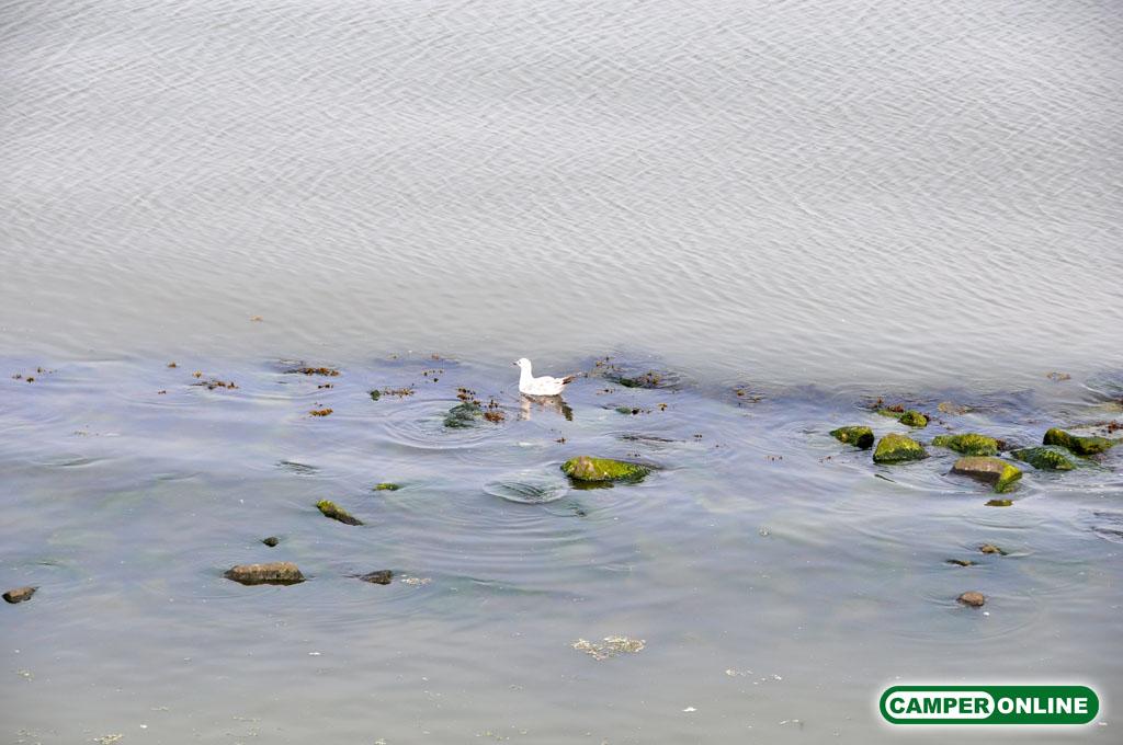 Olanda-Afsluitdijk-011