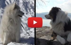 CamperOnBau: in camper con il proprio cane