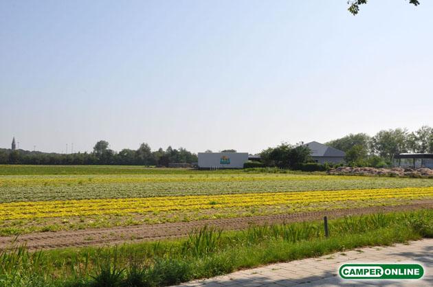 Olanda-Bollenvelden-011