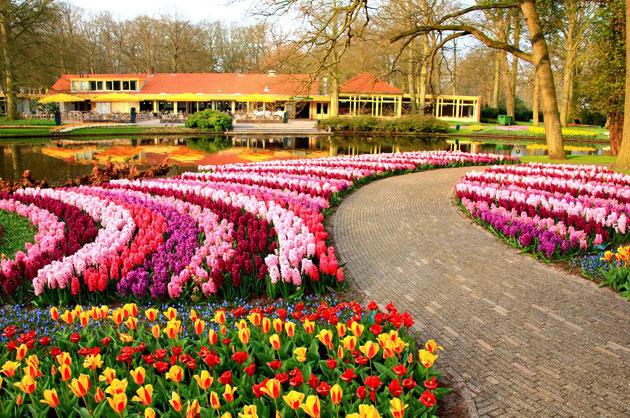 Olanda-Bollenvelden-021