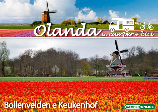 Olanda-Bollenvelden
