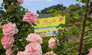 Al Roseto, tra colori e profumi del ponente ligure
