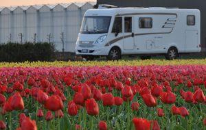Keukenhof, Olanda: in camper nel paradiso dei tulipani